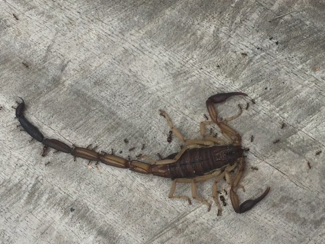 insects, scorpion, travel tips, Nicaragua