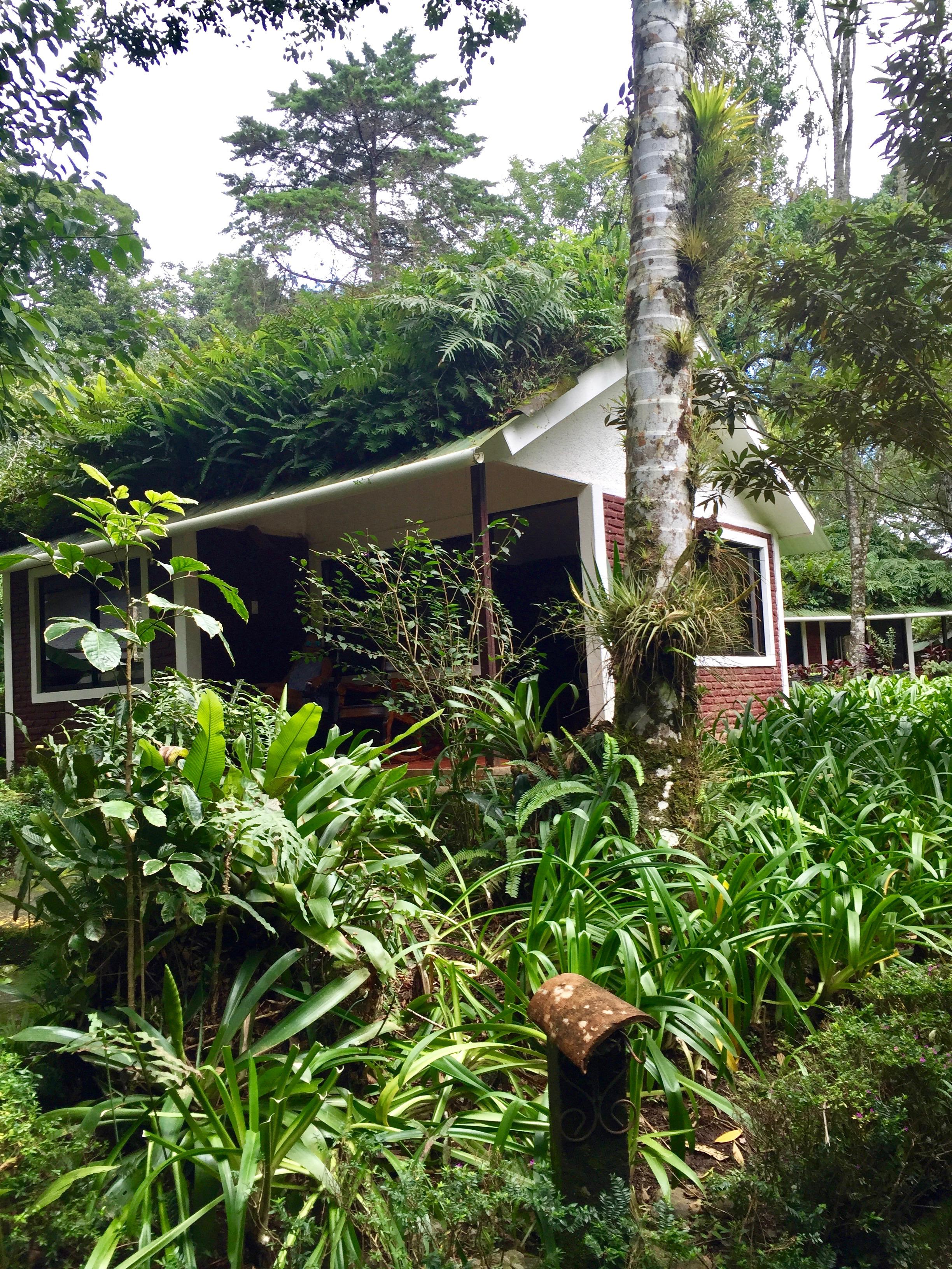 Selva Negra, Matagalpa, Nicaragua, Cloud Forest, hiking, eco-hotel, eco-resort