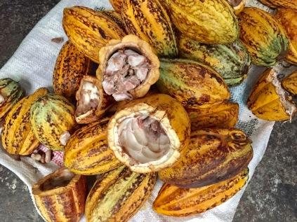 Border run, Costa Rica, Nicaragua, Leon, chocolate, San Jose