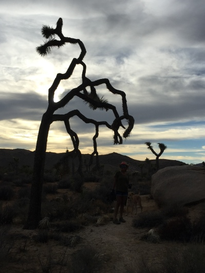Joshua Tree, California, hiking, camping, road trip