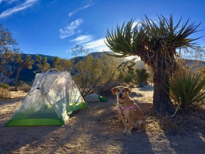 California, Joshua Tree, hiking, camping, road trip