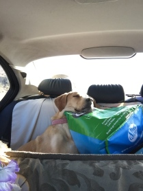 road trip, camping, taking a nap