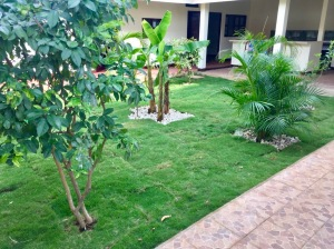 Nicaragua, expat, Leon, hostel, guesthouse, new grass, fruit trees, limes, mandarins, mango